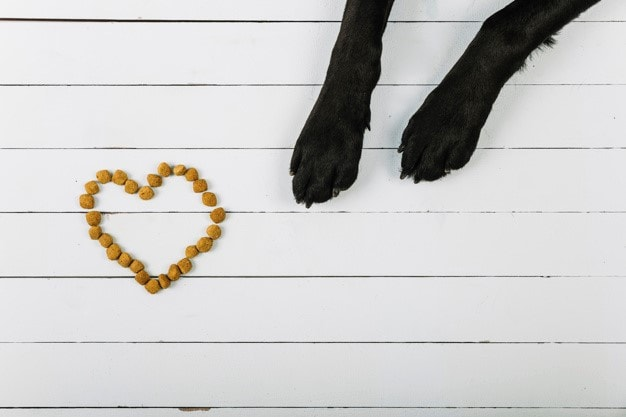 a heart-shaped dog treat