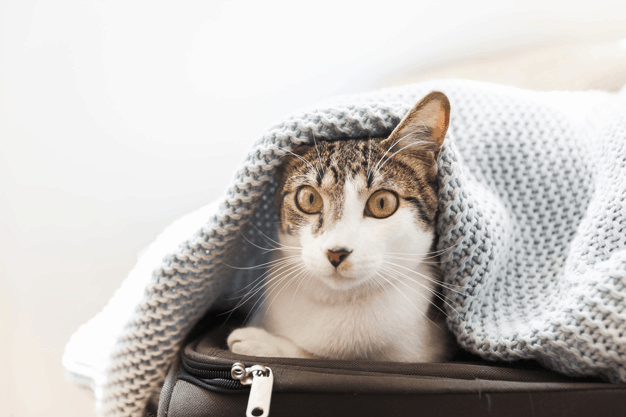 a cat hiding in a luggage