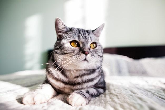 a moody cat