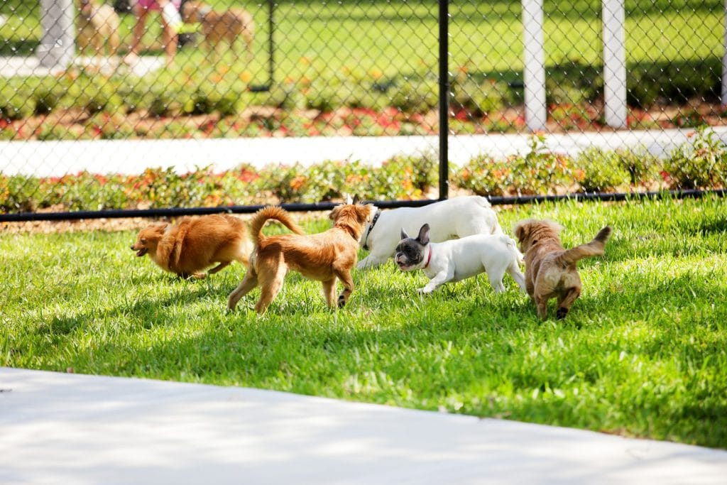 pets playing a grass patch