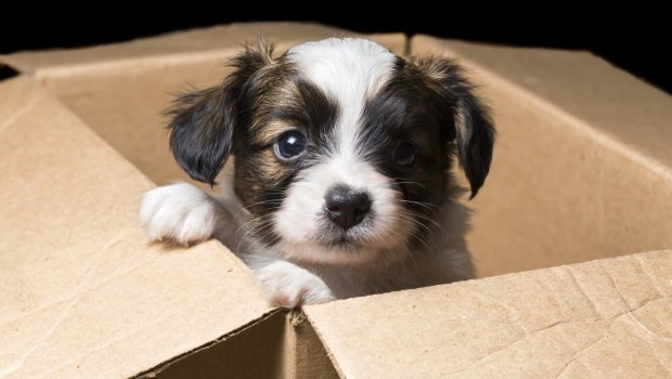 a dog in a box