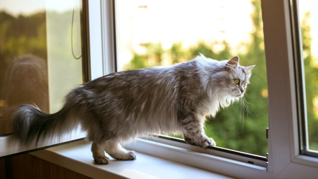a cat at a window ledge